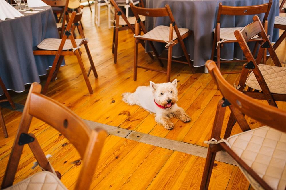 pies na weselu zdjecie