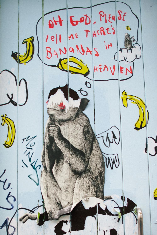 małpa banany smieszny obrazek