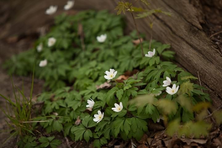 wiosenne kwiaty-zdjecie