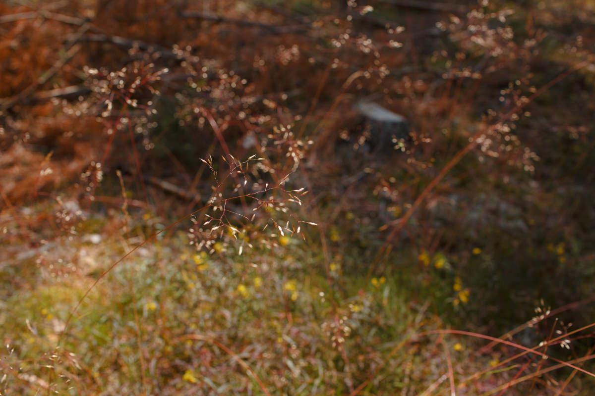 mazurska przyroda w lesie zdjecie