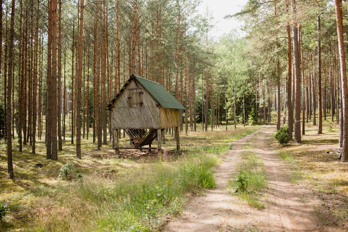 mazurski las okolice szczytna