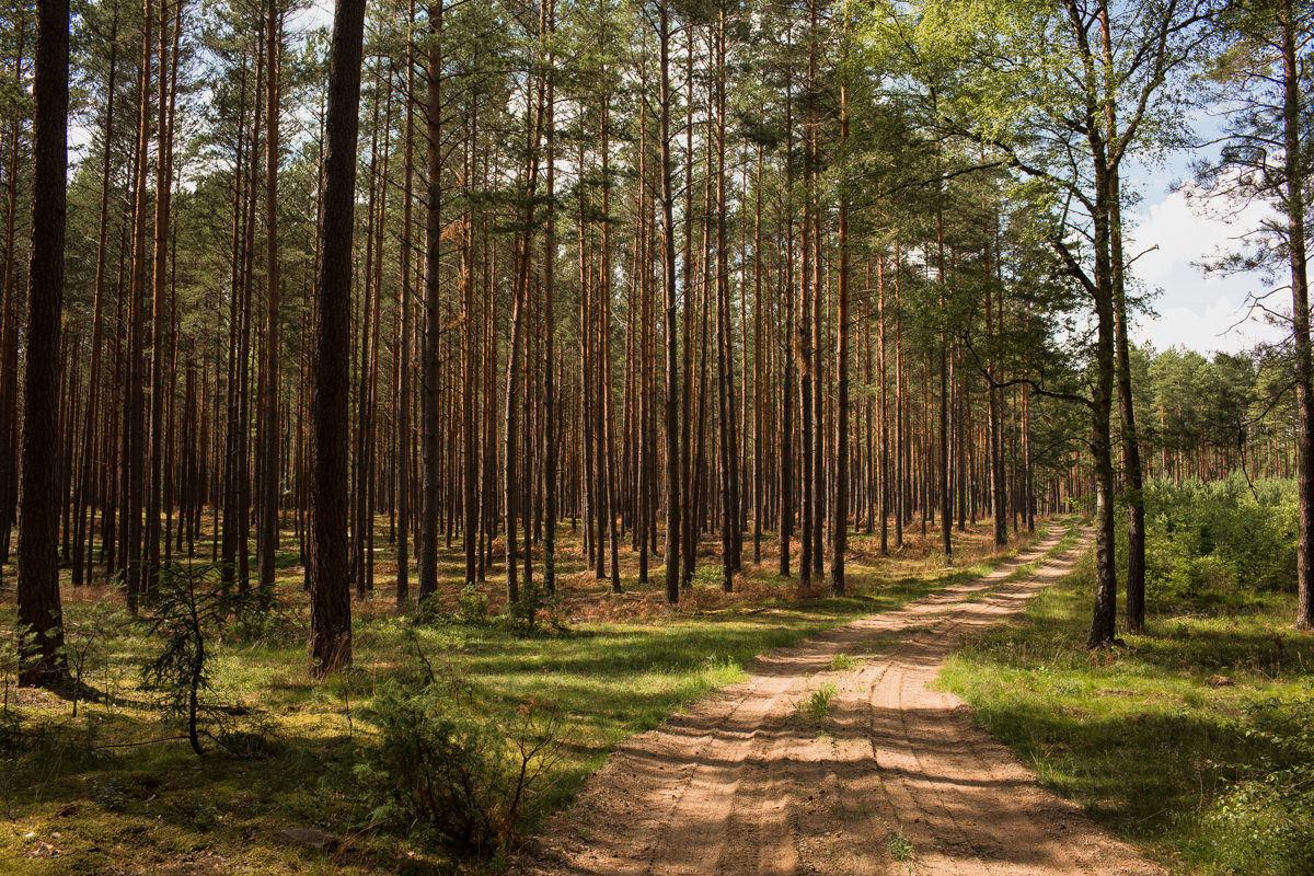 mazury szczytno las zdjecie