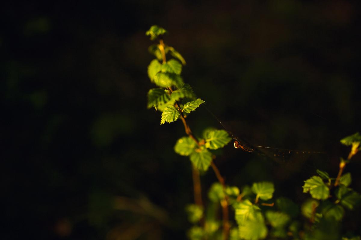zdjecie w lesie mazury jacek siwko