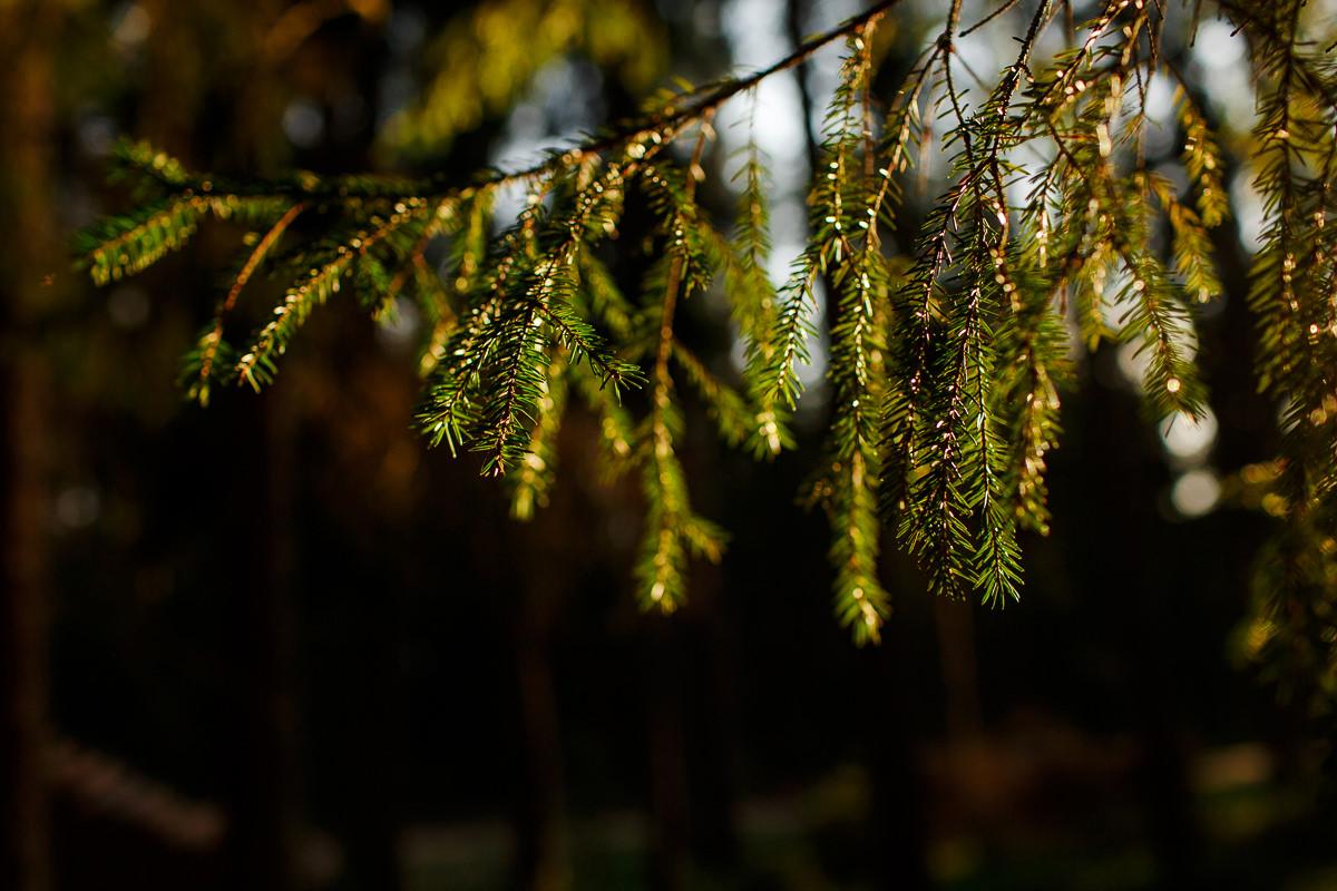 jacek siwko sesja w lesie